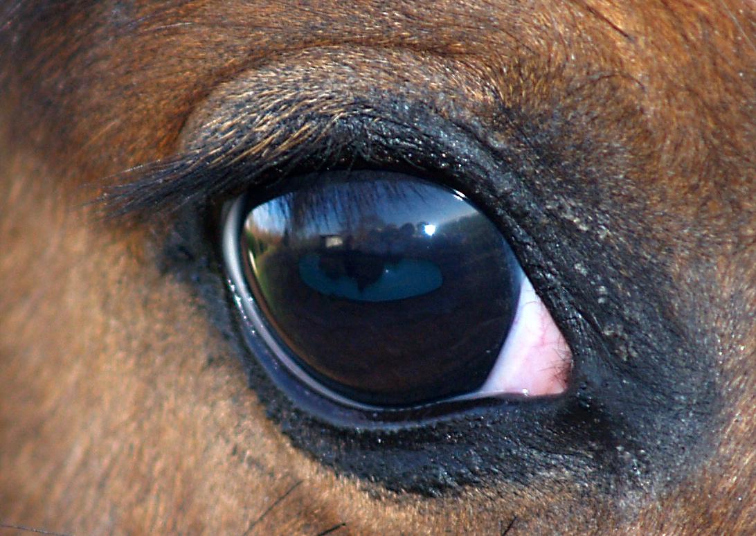 Как лисы съели лошадей