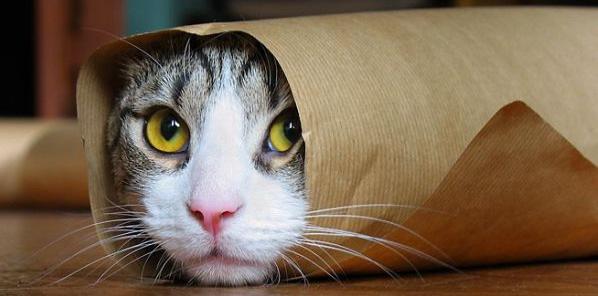 cat_24_06_07_104